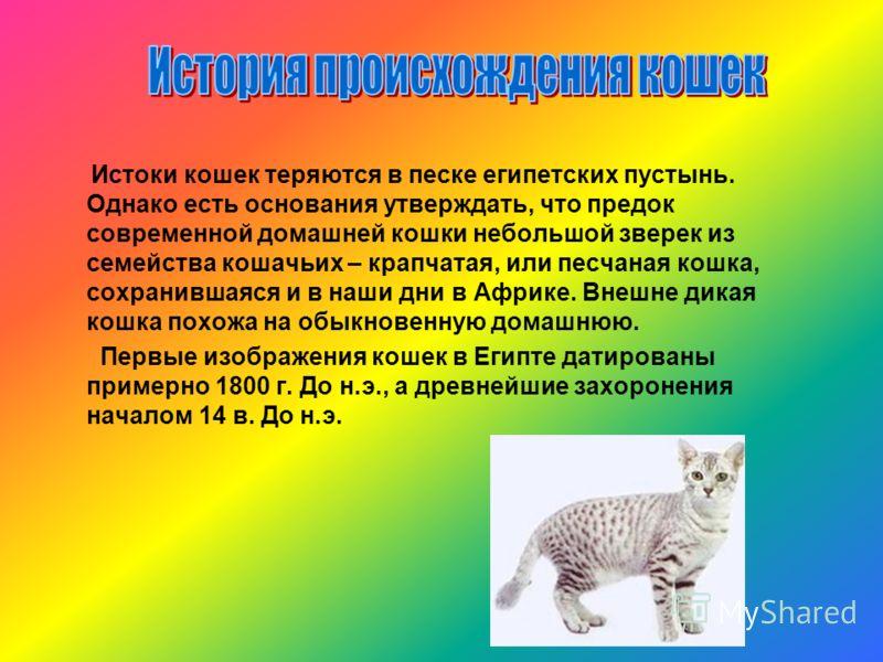 Истоки кошек теряются в песке египетских пустынь. Однако есть основания утверждать, что предок современной домашней кошки небольшой зверек из семейства кошачьих – крапчатая, или песчаная кошка, сохранившаяся и в наши дни в Африке. Внешне дикая кошка