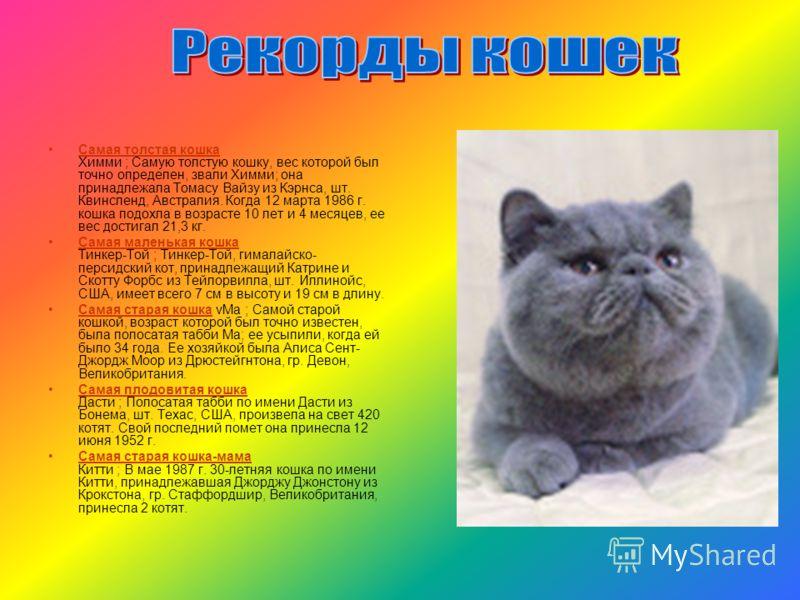 Самая толстая кошка Химми ; Самую толстую кошку, вес которой был точно определен, звали Химми; она принадлежала Томасу Вайзу из Кэрнса, шт. Квинсленд, Австралия. Когда 12 марта 1986 г. кошка подохла в возрасте 10 лет и 4 месяцев, ее вес достигал 21,3