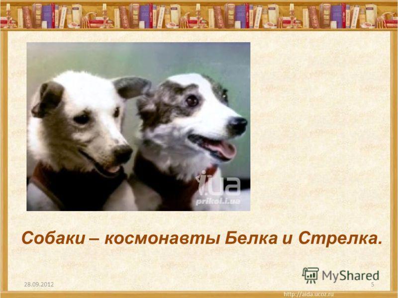 5 Собаки – космонавты Белка и Стрелка.