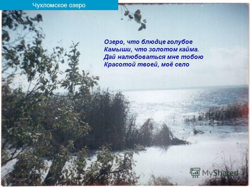 Чухломское озеро Озеро, что блюдце голубое Камыши, что золотом кайма. Дай налюбоваться мне тобою Красотой твоей, моё село
