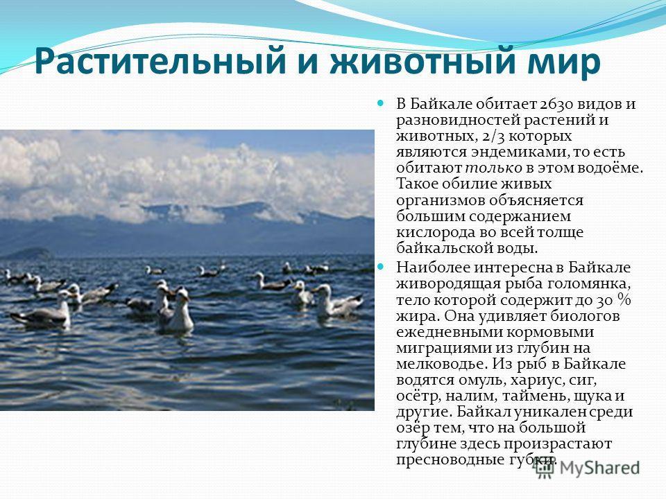 Растительный и животный мир В Байкале обитает 2630 видов и разновидностей растений и животных, 2/3 которых являются эндемиками, то есть обитают только в этом водоёме. Такое обилие живых организмов объясняется большим содержанием кислорода во всей тол