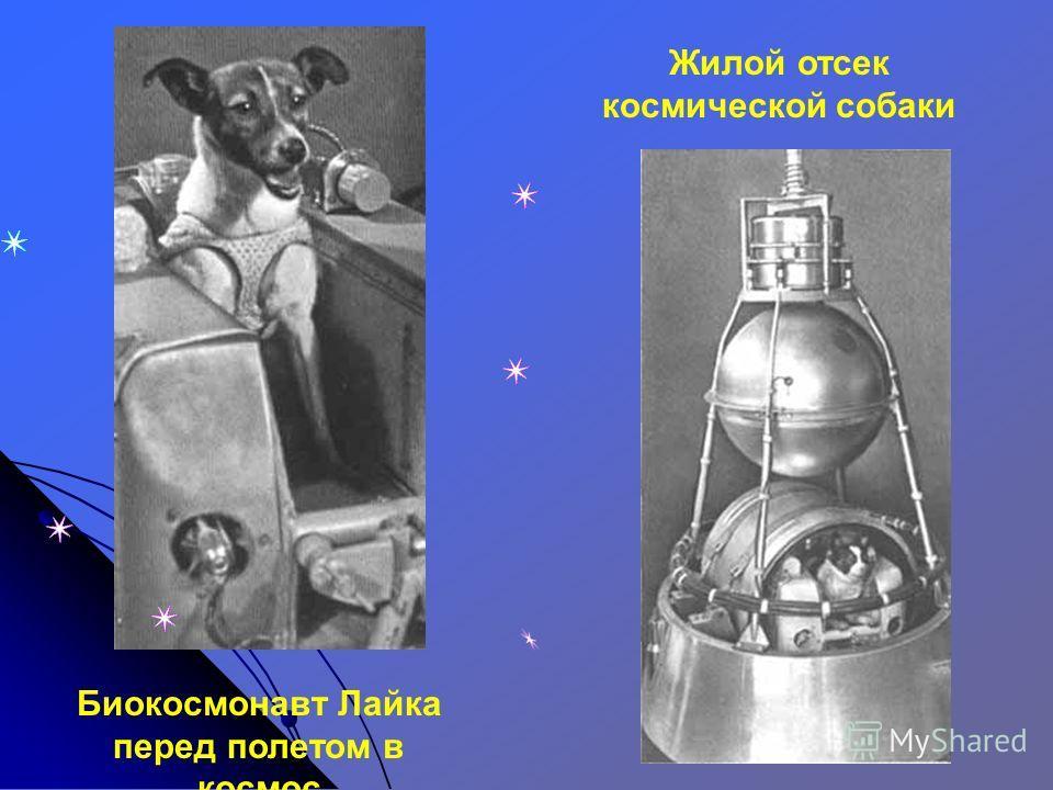 Второй советский искусственный спутник с собакой на борту отправился в космос 3 ноября 1957 года с космодрома Байконур 3 ноября 1957 год