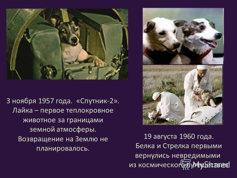 3 ноября 1957 года. «Спутник-2». Лайка – первое теплокровное животное за границами земной атмосферы. Возвращение на Землю не планировалось. 19 августа 1960 года. Белка и Стрелка первыми вернулись невредимыми из космического путешествия