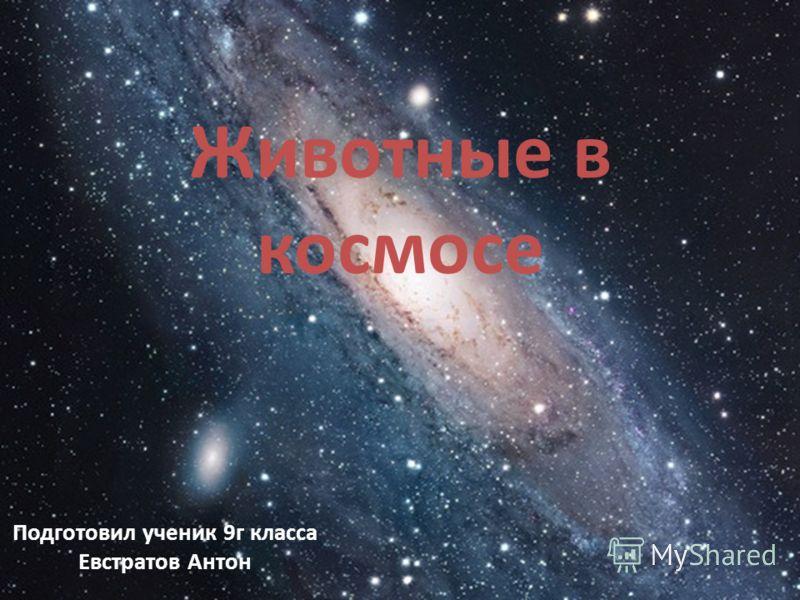 Животные в космосе Подготовил ученик 9г класса Евстратов Антон