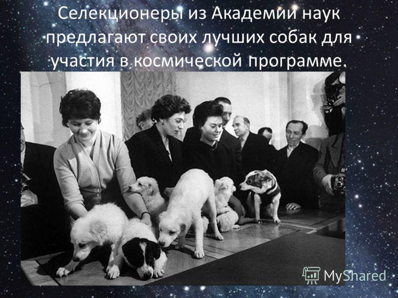Селекционеры из Академии наук предлагают своих лучших собак для участия в космической программе.