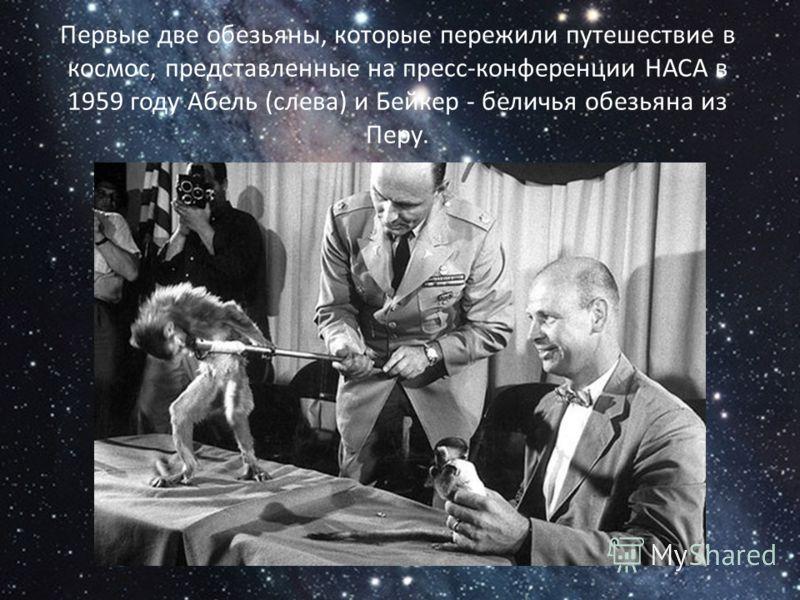 Первые две обезьяны, которые пережили путешествие в космос, представленные на пресс-конференции НАСА в 1959 году Абель (слева) и Бейкер - беличья обезьяна из Перу.