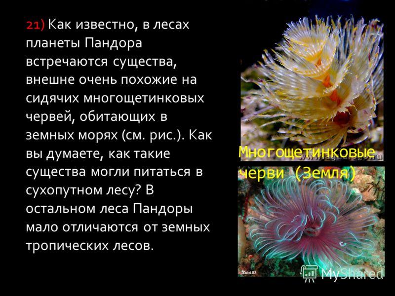 Многощетинковые черви (Земля) 21) Как известно, в лесах планеты Пандора встречаются существа, внешне очень похожие на сидячих многощетинковых червей, обитающих в земных морях (см. рис.). Как вы думаете, как такие существа могли питаться в сухопутном