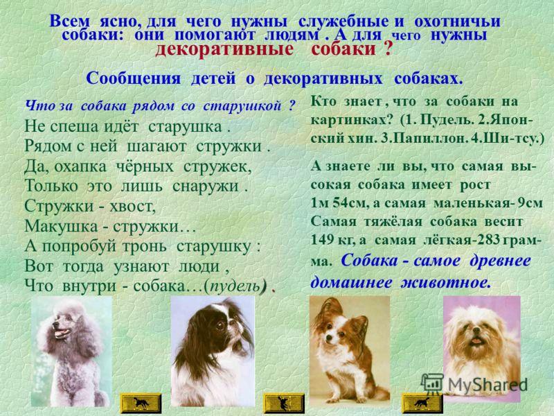 Всем ясно, для чего нужны служебные и охотничьи собаки: они помогают людям. А для чего нужны декоративные собаки ? Сообщения детей о декоративных собаках. Что за собака рядом со старушкой ? Не спеша идёт старушка. Рядом с ней шагают стружки. Да, охап