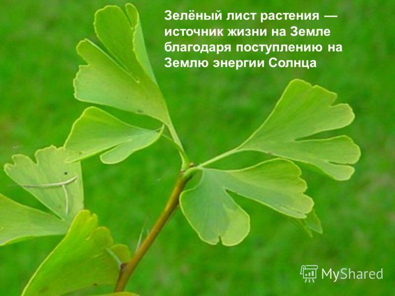Зелёный лист растения источник жизни на Земле благодаря поступлению на Землю энергии Солнца