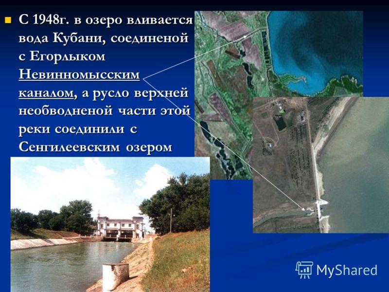 С 1948г. в озеро вливается вода Кубани, соединеной с Егорлыком Невинномысским каналом, а русло верхней необводненой части этой реки соединили с Сенгилеевским озером С 1948г. в озеро вливается вода Кубани, соединеной с Егорлыком Невинномысским каналом