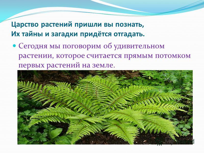 Царство растений пришли вы познать, Их тайны и загадки придётся отгадать. Сегодня мы поговорим об удивительном растении, которое считается прямым потомком первых растений на земле.