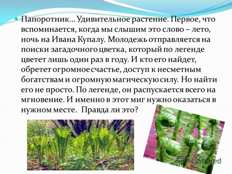Папоротник… Удивительное растение. Первое, что вспоминается, когда мы слышим это слово – лето, ночь на Ивана Купалу. Молодежь отправляется на поиски загадочного цветка, который по легенде цветет лишь один раз в году. И кто его найдет, обретет огромно