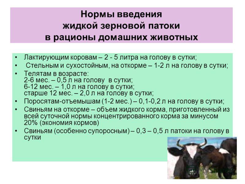 Нормы введения жидкой зерновой патоки в рационы домашних животных Лактирующим коровам – 2 - 5 литра на голову в сутки; Стельным и сухостойным, на откорме – 1-2 л на голову в сутки; Телятам в возрасте: 2-6 мес. – 0,5 л на голову в сутки; 6-12 мес. – 1