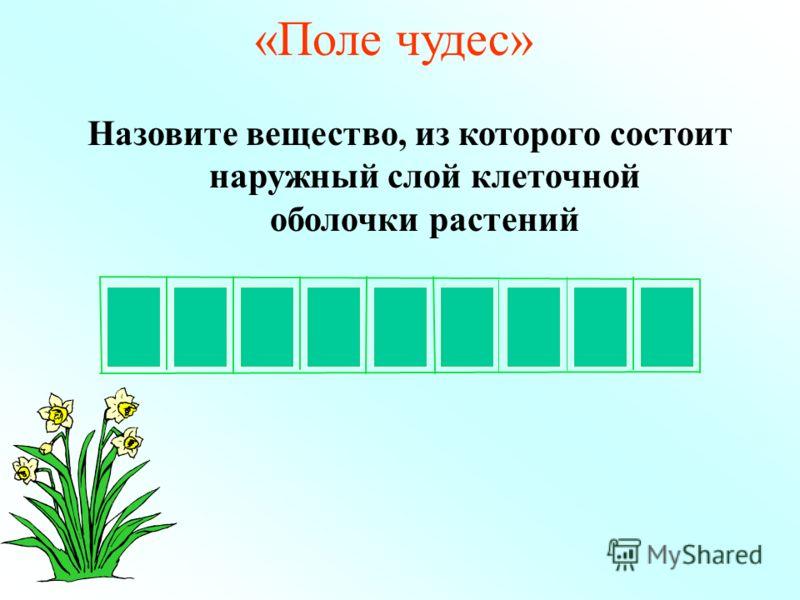 З ОЛЛЮЛАЕЦ «Поле чудес» Назовите вещество, из которого состоит наружный слой клеточной оболочки растений