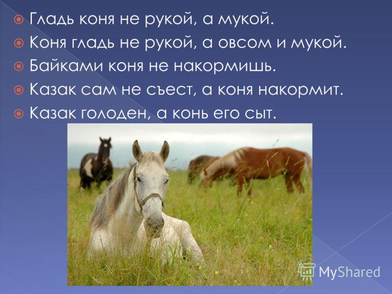 Гладь коня не рукой, а мукой. Коня гладь не рукой, а овсом и мукой. Байками коня не накормишь. Казак сам не съест, а коня накормит. Казак голоден, а конь его сыт.