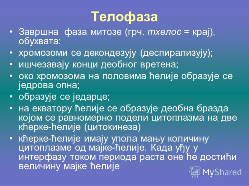 Телофаза Завршна фаза митозе (грч. тхелос = крај), обухвата: хромозоми се декондезују (деспирализују); ишчезавају конци деобног вретена; око хромозома на половима ћелије образује се једрова опна; образује се једарце; на екватору ћелије се образује де