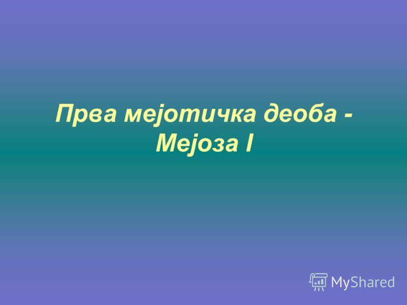 Прва мејотичка деоба - Мејоза I