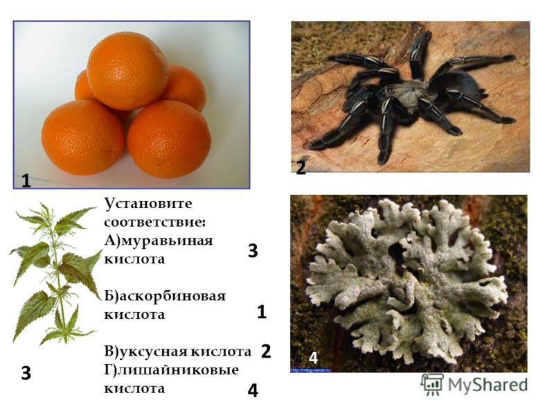 Установите соответствие: А)муравьиная кислота Б)аскорбиновая кислота В)уксусная кислота Г)лишайниковые кислота 1 2 3 4 3 1 2 4 4