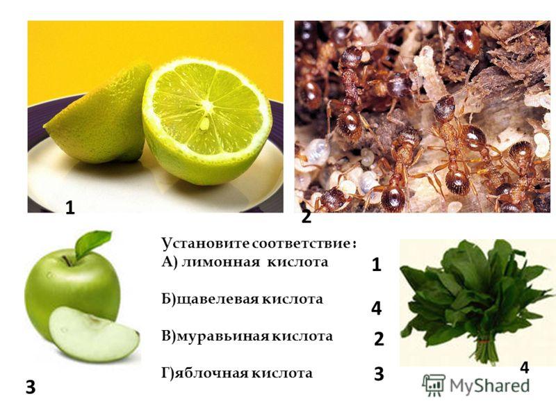 1 2 3 4 Установите соответствие : А) лимонная кислота Б)щавелевая кислота В)муравьиная кислота Г)яблочная кислота 1 4 2 3