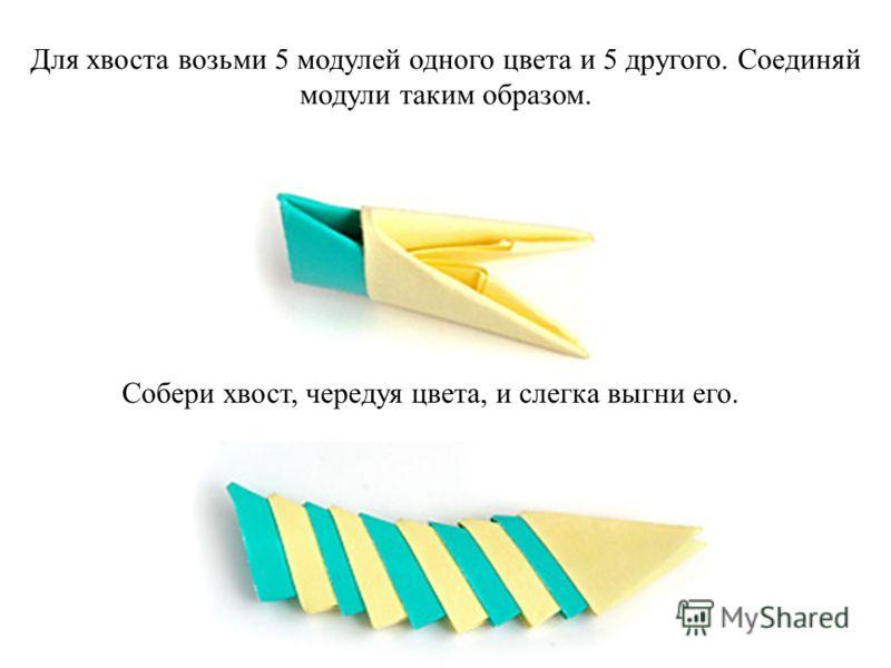 Для хвоста возьми 5 модулей одного цвета и 5 другого. Соединяй модули таким образом. Собери хвост, чередуя цвета, и слегка выгни его.