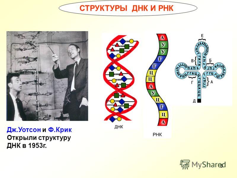 8 СТРУКТУРЫ ДНК И РНК Дж.Уотсон и Ф.Крик Открыли структуру ДНК в 1953г.