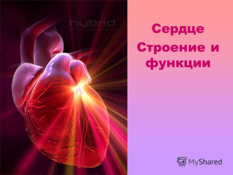 Сердце Строение и функции