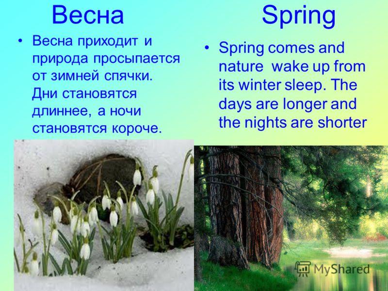 Весна Spring Spring comes and nature wake up from its winter sleep. The days are longer and the nights are shorter Весна приходит и природа просыпается от зимней спячки. Дни становятся длиннее, а ночи становятся короче.