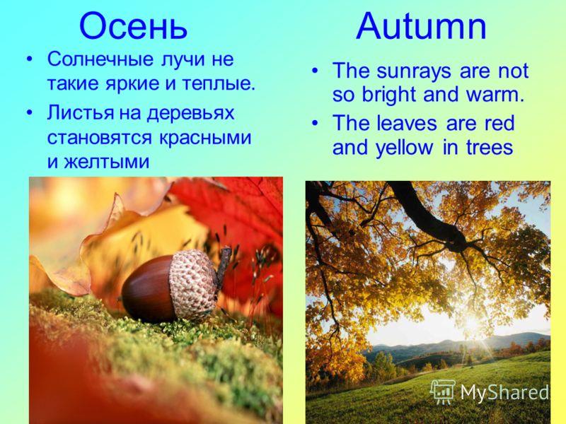 Осень Autumn The sunrays are not so bright and warm. The leaves are red and yellow in trees Солнечные лучи не такие яркие и теплые. Листья на деревьях становятся красными и желтыми