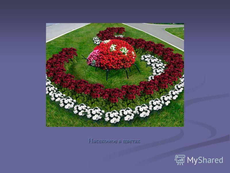 Насекомое в цветах