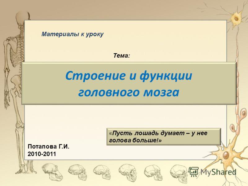 Строение и функции головного мозга « Пусть лошадь думает – у нее голова больше !» Материалы к уроку Тема: Потапова Г.И. 2010-2011