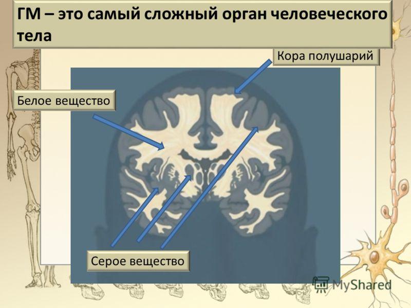 Кора полушарий ГМ – это самый сложный орган человеческого тела Белое вещество Серое вещество