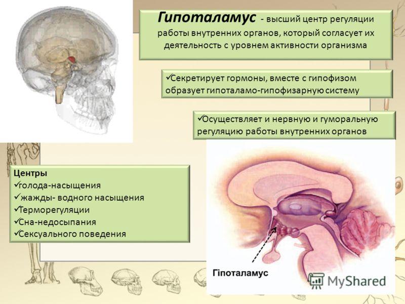 Гипоталамус - высший центр регуляции работы внутренних органов, который согласует их деятельность с уровнем активности организма Секретирует гормоны, вместе с гипофизом образует гипоталамо-гипофизарную систему Осуществляет и нервную и гуморальную рег