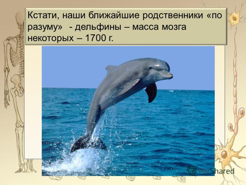 Кстати, наши ближайшие родственники «по разуму» - дельфины – масса мозга некоторых – 1700 г.