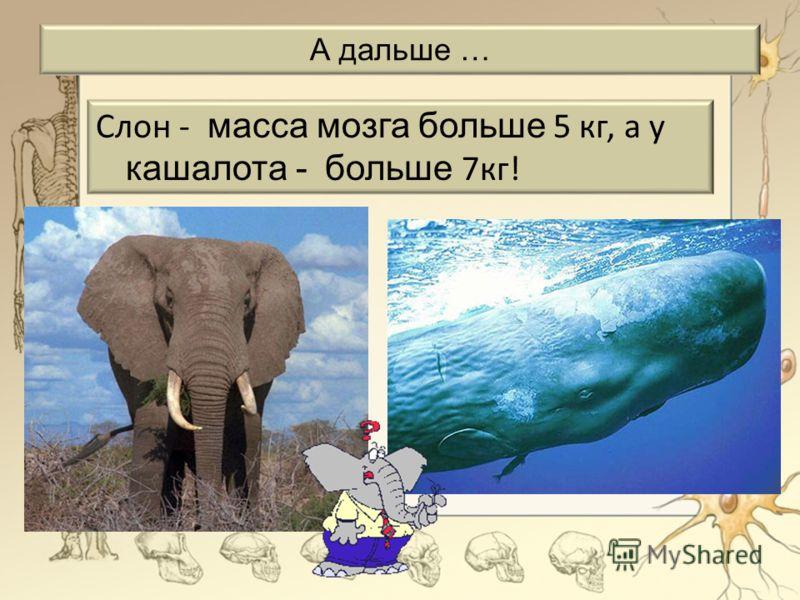 А дальше … Слон - масса мозга больше 5 кг, а у кашалота - больше 7кг!
