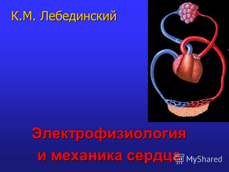 Электрофизиология и механика сердца К.М. Лебединский