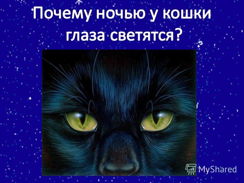 Почему ночью светятся глаза у кошки?