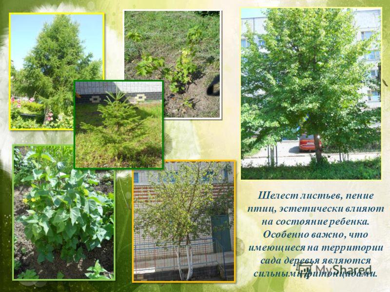Шелест листьев, пение птиц, эстетически влияют на состояние ребенка. Особенно важно, что имеющиеся на территории сада деревья являются сильными фитонцидами.