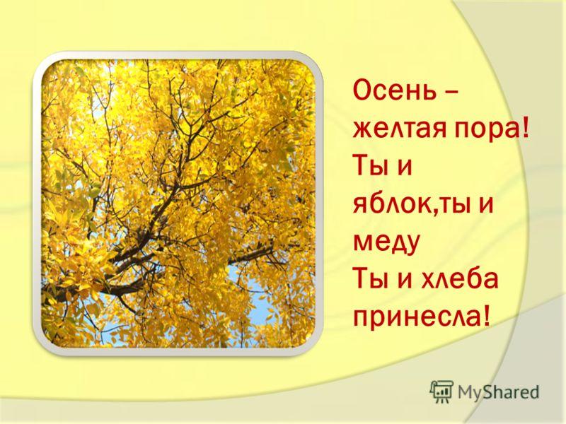 Осень – желтая пора! Ты и яблок,ты и меду Ты и хлеба принесла!