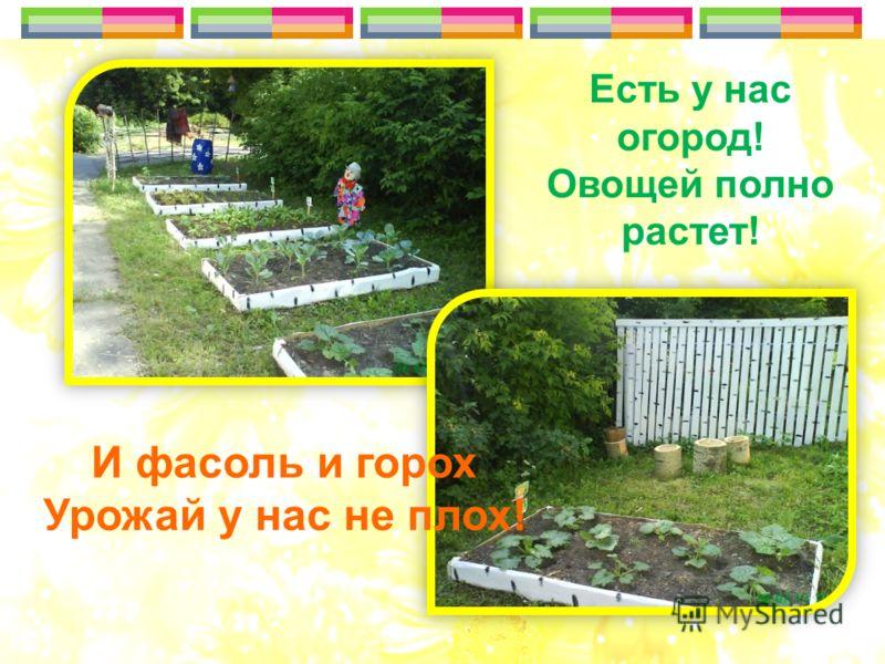 Есть у нас огород! Овощей полно растет! И фасоль и горох Урожай у нас не плох!