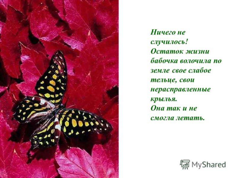 Ничего не случилось! Остаток жизни бабочка волочила по земле свое слабое тельце, свои нерасправленные крылья. Она так и не смогла летать.