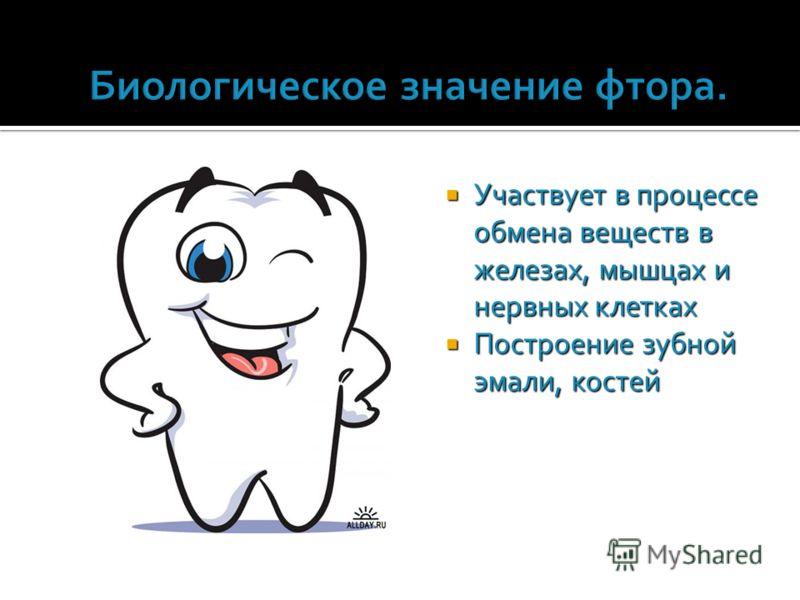 Участвует в процессе обмена веществ в железах, мышцах и нервных клетках Участвует в процессе обмена веществ в железах, мышцах и нервных клетках Построение зубной эмали, костей Построение зубной эмали, костей