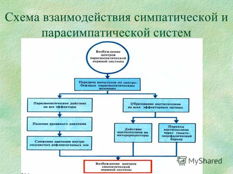 Схема взаимодействия симпатической и парасимпатической систем