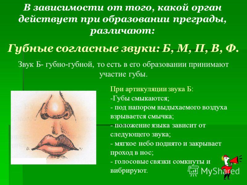 Звук Б- губно-губной, то есть в его образовании принимают участие губы. Губные согласные звуки: Б, М, П, В, Ф. При артикуляции звука Б: -Губы смыкаются; - под напором выдыхаемого воздуха взрывается смычка; - положение языка зависит от следующего звук