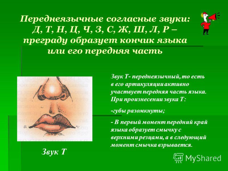 Переднеязычные согласные звуки: Д, Т, Н, Ц, Ч, З, С, Ж, Ш, Л, Р – преграду образует кончик языка или его передняя часть Звук Т Звук Т- переднеязычный, то есть в его артикуляции активно участвует передняя часть языка. При произнесении звука Т: -губы р