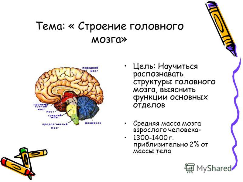 Тема: « Строение головного мозга» Цель: Научиться распознавать структуры головного мозга, выяснить функции основных отделов Средняя масса мозга взрослого человека- 1300-1400 г. приблизительно 2% от массы тела