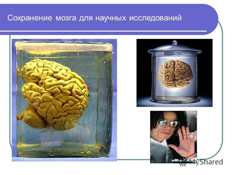 Сохранение мозга для научных исследований