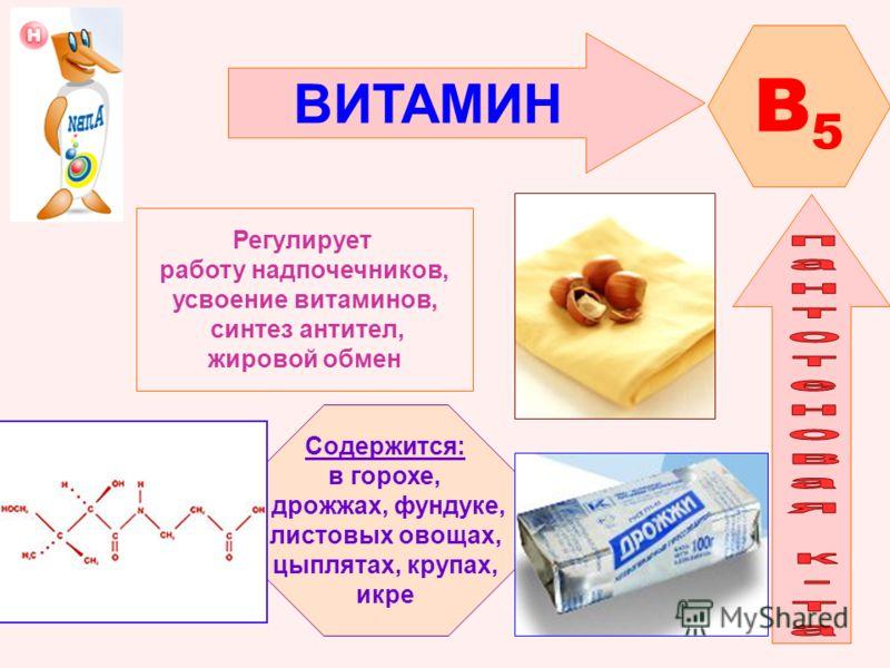 ВИТАМИН B5B5 Регулирует работу надпочечников, усвоение витаминов, синтез антител, жировой обмен Содержится: в горохе, дрожжах, фундуке, листовых овощах, цыплятах, крупах, икре
