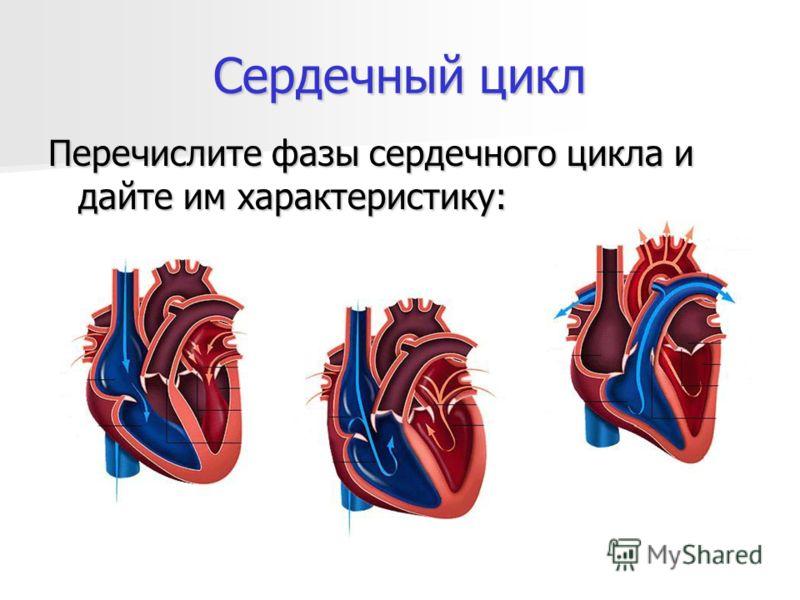 Сердечный цикл Перечислите фазы сердечного цикла и дайте им характеристику: