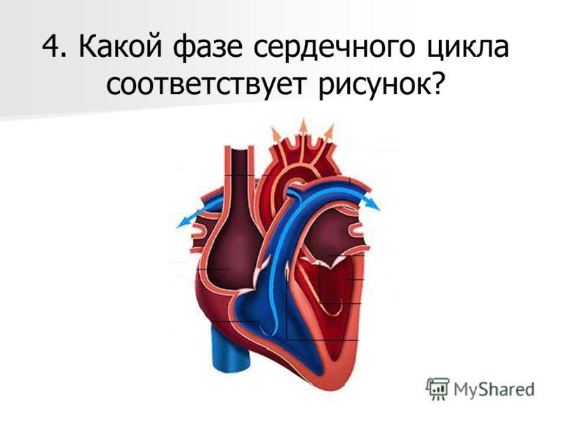 4. Какой фазе сердечного цикла соответствует рисунок?