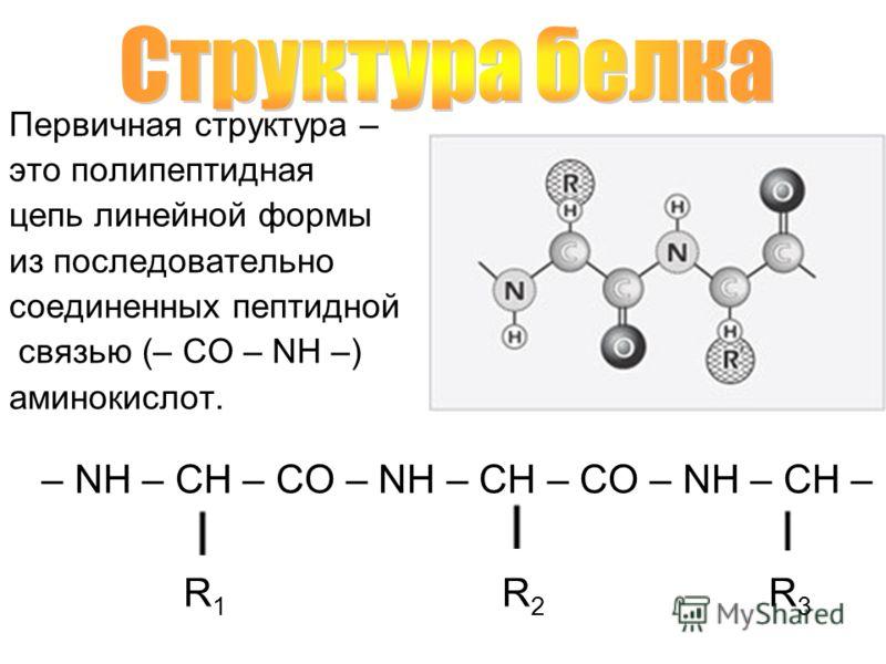Первичная структура – это полипептидная цепь линейной формы из последовательно соединенных пептидной связью (– CO – NH –) аминокислот. – NH – CH – CO – NH – CH – CO – NH – CH – R 1 R 2 R 3